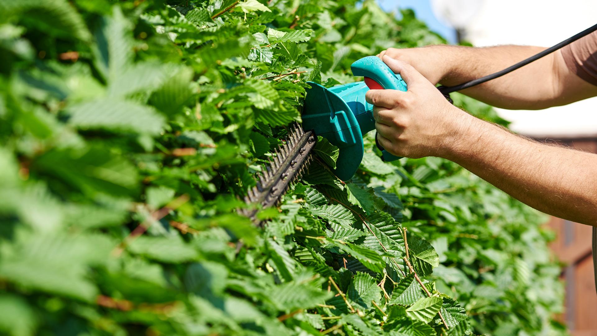 Gartenpflege Heckenschere